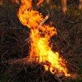 Lehtede ja prügi põletamine on koduaedades keelatud