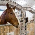 Renoveeritud Tori Hobusekasvandus tutvustab eesti ajaloolisi hobusetõuge.