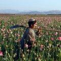 ÜRO: oopiumi ja kokaiini ülemaailmne tootmine on rekordtasemel