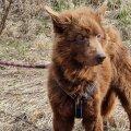 ФОТО | В Сетумаа пожилой мужчина завел собак, но ситуация вышла из-под контроля