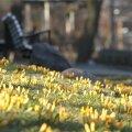 Aprilli alguses on olnud nii üle 20 kraadi sooja kui ka ligi 23 kraadi külma