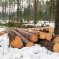 Kuidas müüa metsa kasutusvalduse lepinguga?