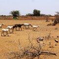 Mali. Foto on illustreeriv.