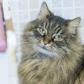 KODULEIDJA   Kolm uhket õde: Veera on võimukas kass, kes kõnnib omapäi