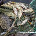 Merekaitsja: kalad võivad peagi ookeanist kaduda