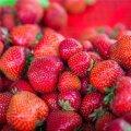 Austraalias alustati juurdlust maasikatesse peidetud nõelte kohta