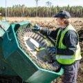 Ekskavaatorijuht täidab metsaistutusmasina kasseti potitaimedega, mille masin mulda paneb.