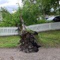 Страховая фирма: июльские штормы натворили бед