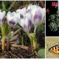 AIAHOOLIKU BLOGI | Hiline kevad ja erinevad arusaamad aiatöödest