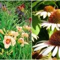 AIAHOOLIKU BLOGI | On päevaliiliate ja liblikate aeg...