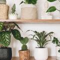Just need taimed on parimad kodused õhupuhastajad