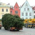 VIDEO ja FOTOD | Tallinna jõulukuusk saabus Raekoja platsile
