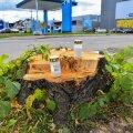 Viljandis on maha saetud hulk puid, kändude peale on pandud ka leinaküünlad.