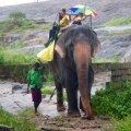 Sõit taltsutatud elevandil – üks võimalus muuta piirkonda turistidele atraktiivsemaks.