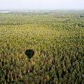 Ajaleht: Eesti kukutas Soome metsade süsiniku sidumise arvestuses EL-is madalamasse klassi, mida soomlased peavad ebaõiglaseks