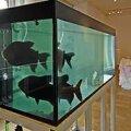 Agressiivsed piraajad loomaaia simulatsioonis: Tanel Saare installatsioon. Tagaplaanil Jenni Juulia Wallinheimo töö. Jaanus Heinla