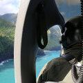 Hawaiil leiti alla kukkunud helikopteri lähedalt mitme ohvri surnukeha