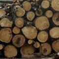 Korstnapühkija hoiatab märgade puudega kütmise eest