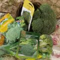 Spargelkapsas ehk brokkoli