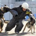 Kodanikujulgus: Viljandis aitas koeraga mees tabada kurjategijaid