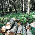 Suurärimees Neinar Seli tõmbas looduskaitsealal loata puid maha, kirvetööd uurib prokuratuur