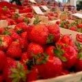 FOTOD: maasikad maksavad turul üks euro kilo