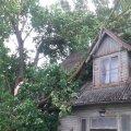 Murdunud puu Tartus