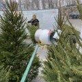 Впервые в Эстонии: теперь елки можно купить в круглосуточных пунктах самообслуживания