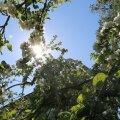 Nädala ilmaprognoos: suvi on käes, tuulele avatud rannikud jäävad veel kõledaks