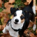Küsimused ja vastused: ekspert annab kasulikku nõu koeraomanike peamistele küsimustele
