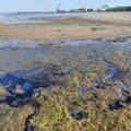 Reostunud merevesi Loksal