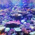 В Пярну во время перевозки морского аквариума пострадали шесть человек, один попал в больницу