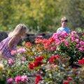 Roosipäevad Tallinna Botaanikaaias