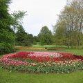 Tallinna Botaanikaaia tulbinäitus