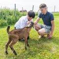 Anneli Kööba-Orlov ja poeg Hans-Erik Jakob peavad Kamelia talus mitmeid loomi, kellega suhtlemine alandab stressi.