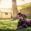 Ole ettevaatlik — need on tegevused, mida su koer ei salli