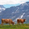 IMELINE REIS: Šveits jätab hinge helisema