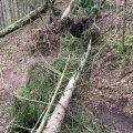 Kui metsaomanik looduskaitseliste piirangute tõttu oma metsa kasutada ei saa, siis tuleks see õiglase hinnaga hüvitada. Kas praegune kehtiv hinna määramise metoodika põhiseadusele vastab, peab ütlema riigikohus.