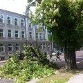 Toompuiesteel rebis tuul puu küljest suure oksa