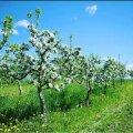 Eesti mahlatootja kingib arstidele tuhandeid liitreid kodumaist mahla