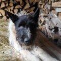 ФОТО | Легендарный таллиннский бродячий пес Жорик вышел из комы и сбежал от новых хозяев
