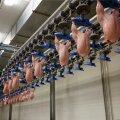 HKScan Estonia Talleggi Tabasalu lihatööstus on Hiina ametnikel juba auditeeritud.