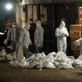 Shanghais suleti linnugripi tõttu linnuturud, 20 000 lindu tapeti
