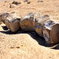 Peruu marutõbine kõrberebane III