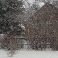 FOTO ja VIDEO: Simunas sadas tihedalt ja paksult lund