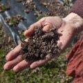 Mulla orgaanilise süsiniku varu suurenemine on üks võimalus, kuidas maailma kliimat päästa.