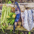 METSA SÖÖMA! Vaata videost, kuidas teha metsas sütel grillitud kala metsakraamist salati ja lisanditega