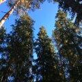 Soome mets, meri ja linn
