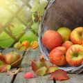 RETSEPTID | Soolased toidud, mille sisse sobib õun nagu rusikas silmaauku