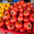 Специалисты PTA обнаружили в Харьюмаа незнакомый Эстонии вирус, поражающий томаты